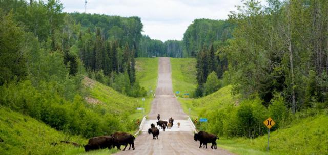 Highway 7- Liard Trail